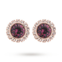 Ted Baker Jewellery Ladies' PVD rose Plating Sully Crystal Daisy Stud Earrings